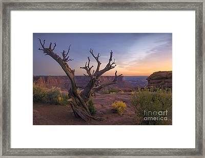 Primordial Spectacle Framed Print by Marco Crupi