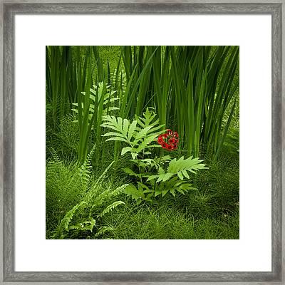 Primrose Amidst Ferns Framed Print