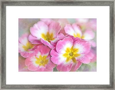 Primrose Bouquet Framed Print by David and Carol Kelly