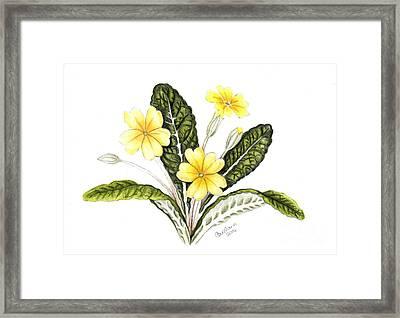 Primrose Framed Print by Carol Doran