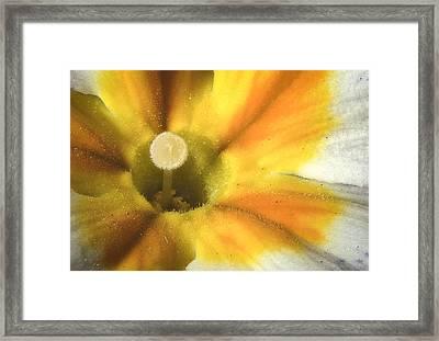 Primrose Closeup Framed Print