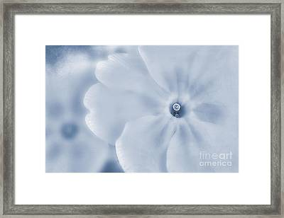 Primrose Cyanotype Framed Print by John Edwards