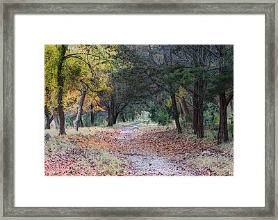 Primrose Path Ramble Framed Print by Wendy J St Christopher