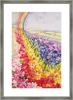 Primrose Rainbow Framed Print by Joan Thewsey