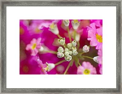 Primrose Spring Framed Print