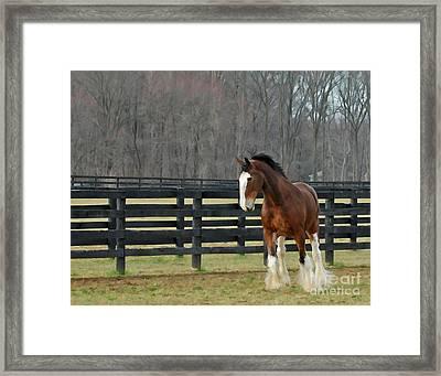 Prince Charming Framed Print