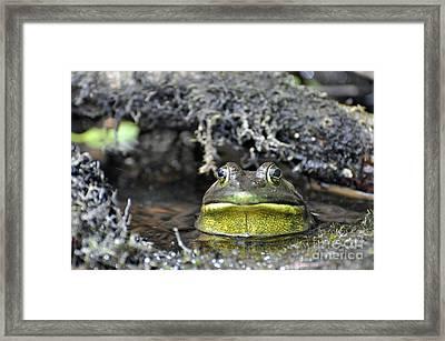 Framed Print featuring the photograph Bullfrog by Glenn Gordon