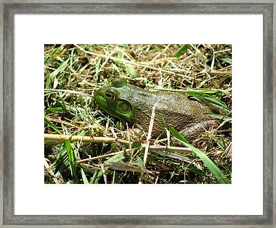 Prince In Disguise Framed Print