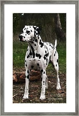Prince Of A Dog Framed Print by Blair Stuart