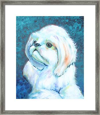Prince The Little Dog Framed Print