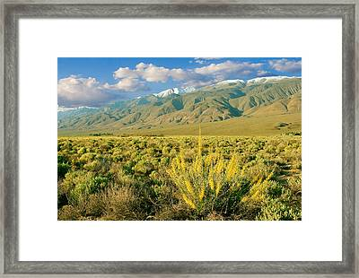 Princes Plume And White Mountains - Owens Valley California Framed Print by Ram Vasudev