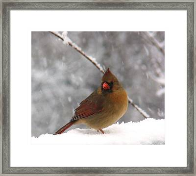 Princess In The Snow Framed Print