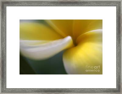 Princess Plumeria Framed Print by Mary Lou Chmura