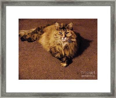 Princess Puff-o-fluff Framed Print by Jacquelyn Roberts