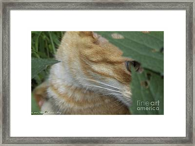 Princeton Framed Print by Mary  King