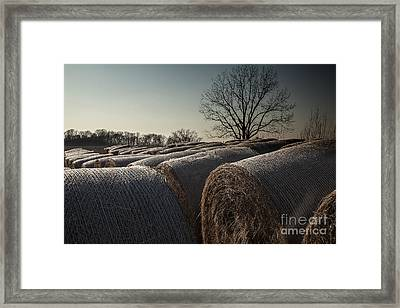 Hay Bales At Dusk Framed Print by Larry Braun