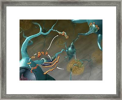 Prions In Brain Disease Framed Print by Nicolle R. Fuller