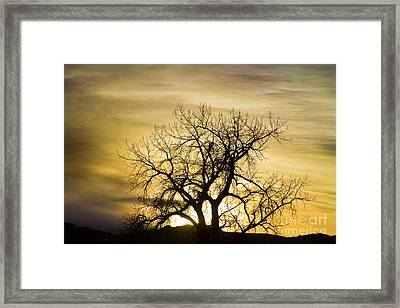 Prism Sunset Light Tree Magic Hour Framed Print