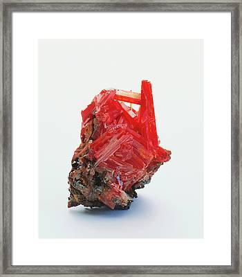 Prismatic Crocoite Crystals Framed Print by Dorling Kindersley/uig