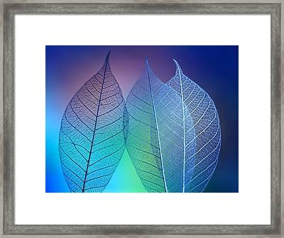 Prismatic Leafs Framed Print