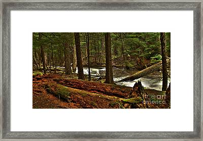 Framed Print featuring the photograph Pristine Forest by Sam Rosen