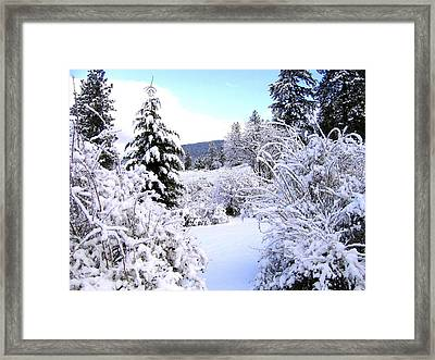 Pristine Winter Trail Framed Print by Will Borden