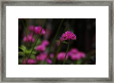 Pretty In Pink Framed Print by Yvonne Wright