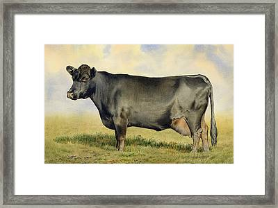 Prize Dexter Cow Framed Print by Anthony Forster