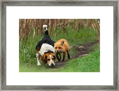 Probably The World's Worst Hunting Dog Framed Print