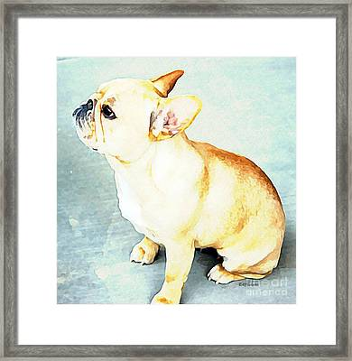 Profile In Frenchie Framed Print