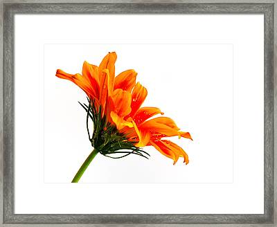 Framed Print featuring the photograph Profile Of A Flower by Marwan Khoury
