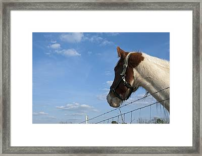 Framed Print featuring the photograph Profile Of A Horse by Charles Beeler