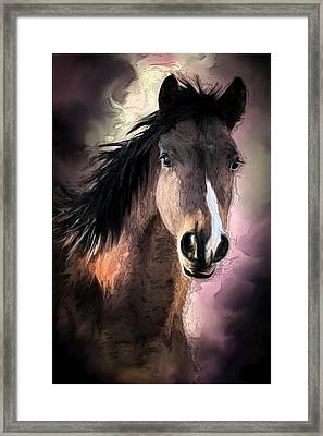 Profile Of A Horse Framed Print