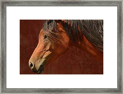 Profile Of A Horse. Framed Print by Tommytechno Sweden