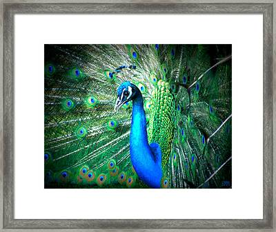 Framed Print featuring the photograph Profile Of A Peacock  by Heidi Manly