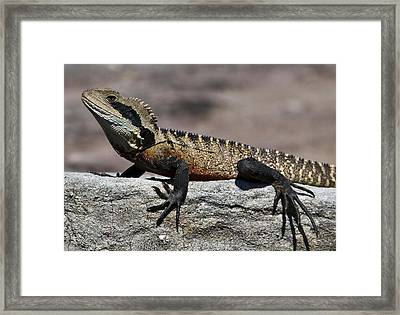 Framed Print featuring the photograph Profile Of A Waterdragon by Miroslava Jurcik