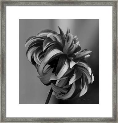 Profile Of Not Santa Two In Black And White Framed Print