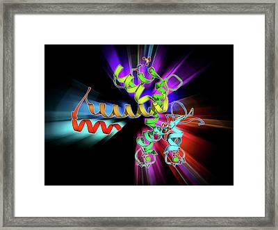 Programmed Cell Death Protein 6 Molecule Framed Print by Laguna Design