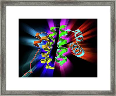 Programmed Cell Death Protein Molecule Framed Print by Laguna Design