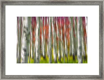 Progression Of Autumn Framed Print by Adam Romanowicz