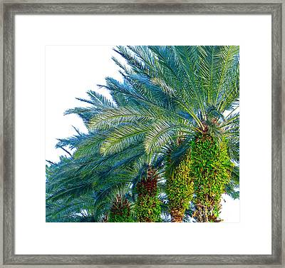 Progression Of Palms Framed Print by Joy Hardee