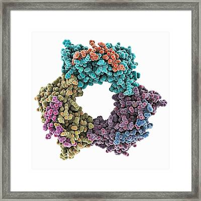 Proliferating Cell Nuclear Antigen Framed Print by Science Photo Library