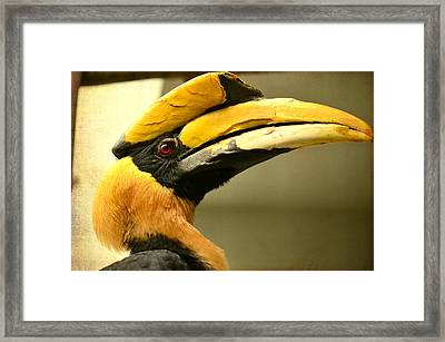 Prolific Profile Framed Print by Fraida Gutovich