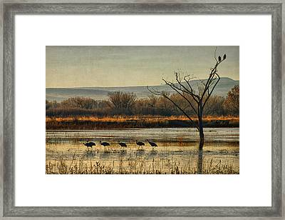 Promenade Of The Cranes Framed Print by Priscilla Burgers