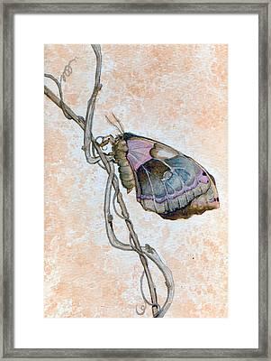 Promethea Moth Framed Print