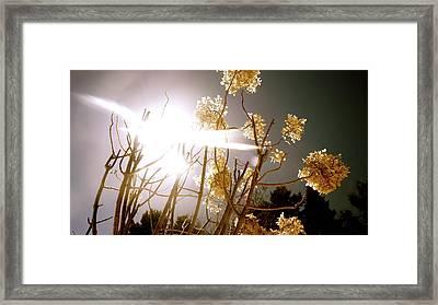 Promise Framed Print by Danielle  Broussard