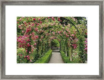 Rose Promenade   Framed Print by Natalie Ortiz