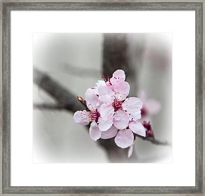 Promise Of Spring Framed Print by Annette Hugen