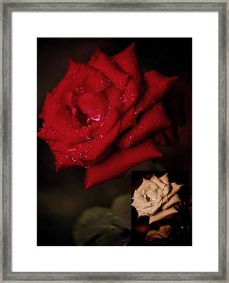 Promise Of Tomorrow Framed Print by DigiArt Diaries by Vicky B Fuller