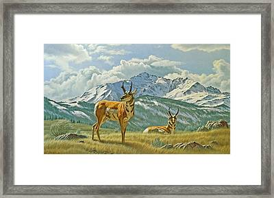 Pronghorn Below Electric Peak Framed Print by Paul Krapf
